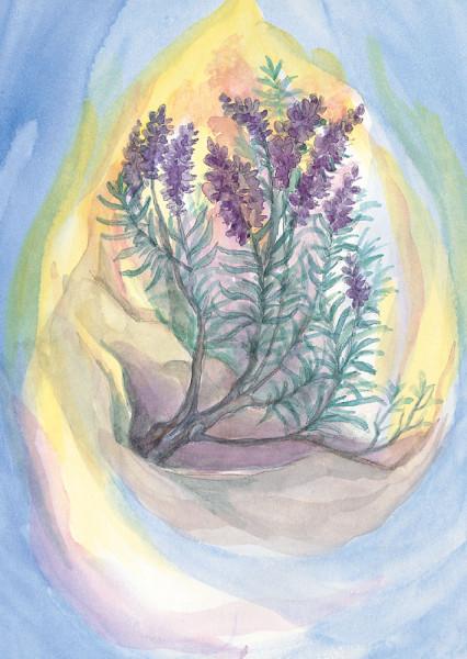 Lavendel Postkarte