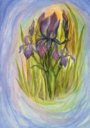 Iris Postkarte