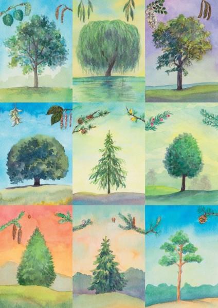 18 Baumbestimmungskarten