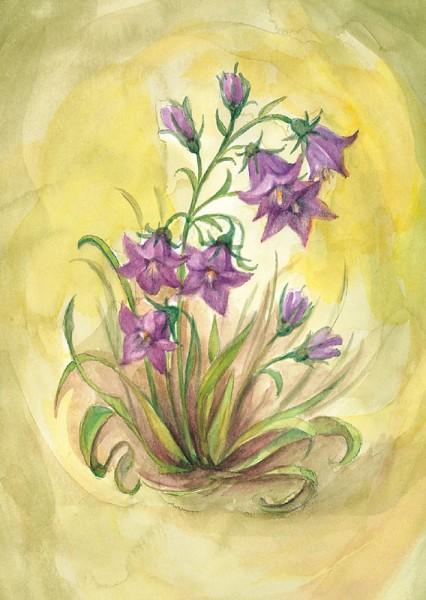 Glockenblume Postkarte