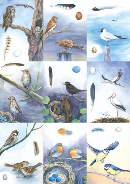 18 Vogelbestimmungskarten