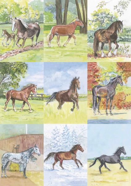 18 Pferdebestimmungskarten