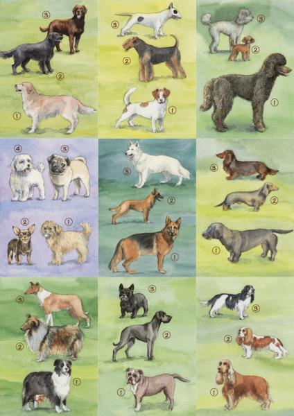 18 Hundebestimmungskarten