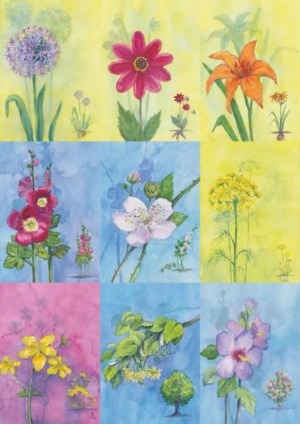 18 Bienen-Sommerblüten-Karten