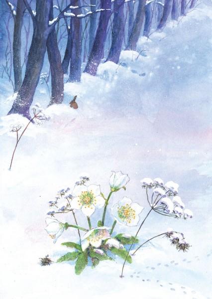Christrose Postkarte